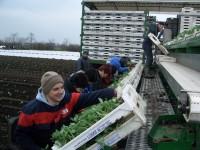 Praca sezonowa w gospodarstwie rolnym w Niemczech