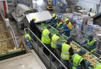 Praca przy pakowaniu owoców i warzyw w Niemczech
