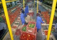 Praca w Niemczech na linii produkcyjnej przy sortowaniu owoców