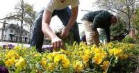 Ogrodnik – praca sezonowa w Niemczech w ogrodnictwie