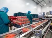 Praca w Niemczech przy pakowaniu warzyw i owoców dla kobiet (Kolonia)