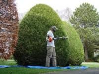 Oferty pracy w Niemczech w ogrodnictwie od zaraz (Dortmund)