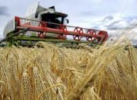 Praca w Niemczech w rolnictwie (gospodarstwo rolne) ogłoszenie sezonowe 2013