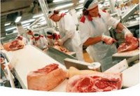 Produkcja praca w Niemczech przy obróbce mięsa bez znajomości języka