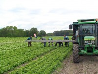 Praca w Niemczech przy zbiorach warzyw i owoców – sezonowa 2013