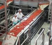 Sezonowa praca w Niemczech produkcja, sortowanie warzyw bez języka LIPSK