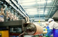 Oferta pracy w Niemczech na produkcji bez języka dla par Hamburg