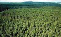 Sezonowa praca w Niemczech w leśnictwie dla robotnika leśnego Fulda
