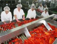 Praca Niemcy na produkcji w przetwórni bez znajomości języka pakowanie, sortowanie Zwickau