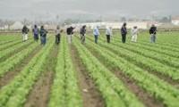 Praca w Niemczech przy zbiorach warzyw bez znajomości jezyka niemieckiego