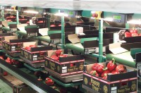 Praca w Niemczech na produkcji przy taśmie bez języka sortowanie warzyw Berlin