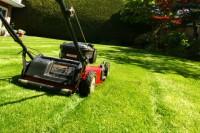 Aktualne ogłoszenie fizycznej pracy w Niemczech w ogrodnictwie od zaraz