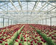 Sezonowa praca Niemcy przy kwiatach w szklarni od zaraz z zamieszkaniem