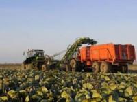 Sezonowa praca w Niemczech przy zbiorach warzyw bez języka Löbau