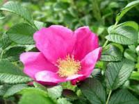 Od zaraz sezonowa praca Niemcy bez języka dla par przy kwiatach, zbiorach kalafiora