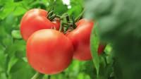 Niemcy praca sezonowa bez znajomości języka przy zbiorach warzyw Bremen