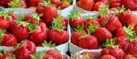 Sezonowa praca Niemcy przy zbiorach owoców w rolnictwie wakacje 2015