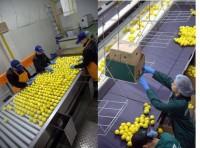 Od zaraz praca Niemcy pakowanie-sortowanie owoców bez języka dla par Rostock
