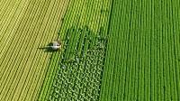 Sezonowa praca w Niemczech przy zbiorach warzyw od września 2015 Cappeln