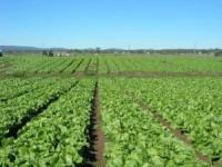 Zbiory warzyw oferta sezonowej pracy w Niemczech 2015 od zaraz w Bonn