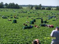 Bez języka sezonowa praca Niemcy przy zbiorach warzyw od zaraz Drezno