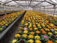 Niemcy praca sezonowa w szklarni przy zbiorach kwiatów od zaraz Lipsk
