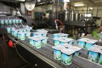 Duisburg praca w Niemczech bez języka na produkcji jogurtów od zaraz