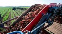 Niemcy praca sezonowa od września 2015 zbiory warzyw okolice Zwickau