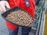 Bez języka Niemcy praca w Berlinie na produkcji suchej karmy dla par