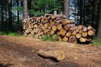 Leśnictwo – sezonowa praca w Niemczech dla Polaków przy wycince drzew