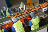 Od zaraz oferta pracy w Niemczech przy pakowaniu warzyw Cottbus bez języka