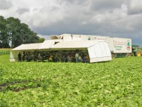 Niemcy praca bez znajomości języka sezonowa przy zbiorach warzyw Cappeln