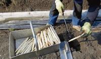 Od zaraz Niemcy praca sezonowa bez języka zbiory szparagów Fellbach