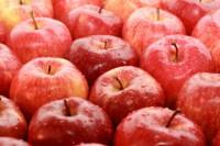 Sezonowa praca w Niemczech bez języka zbiory jabłek i śliwek od zaraz Heilbronn