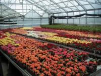 Niemcy praca sezonowa w ogrodnictwie od zaraz bez znajomości języka w Löbau
