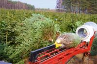 Leśnictwo oferta sezonowej pracy w Niemczech przy choinkach od zaraz Eberswalde