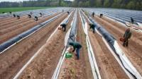 Sezonowa praca Niemcy przy zbiorach szparagów bez języka Fellbach od marca 2017