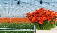 Sezonowa praca Niemcy dla par bez znajomości języka przy kwiatach Emsland