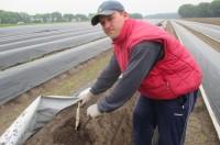 Niemcy praca sezonowa 2018 przy zbiorach szparagów bez języka Neuwarendorf