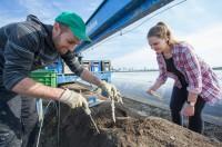 Dam sezonową pracę w Niemczech przy zbiorach szparagów bez języka wakacje 2019 Bawaria