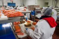 Obróbka ryb – oferta pracy w Niemczech na produkcji k. Rostock