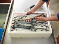 Bez języka Niemcy praca od zaraz na produkcji przy obróbce ryb Rostock 2019
