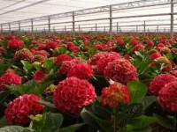 Sezonowa praca w Niemczech od zaraz przy kwiatach bez języka ogrodnictwo Westfalia
