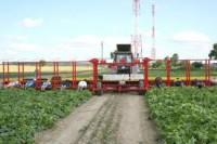 Dla par sezonowa praca w Niemczech bez języka przy zbiorach warzyw od zaraz Hamburg 2020