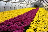 Bez języka sezonowa praca Niemcy w Kempen przy kwiatach od zaraz ogrodnictwo 2020